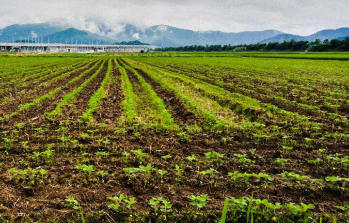 大豆畑より~3